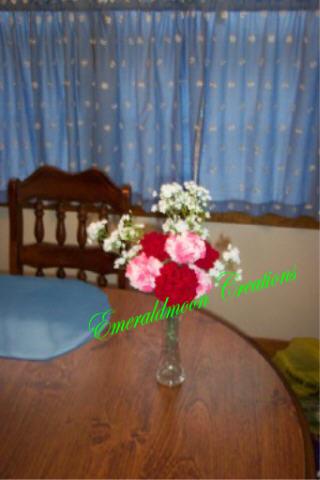 carnations_0353.jpg